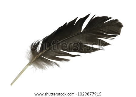 Beautiful feather isolated on white background #1029877915