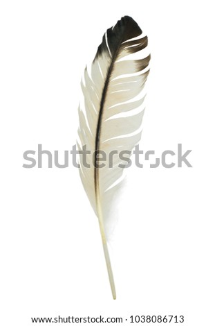 Beautiful feather isolated on white background #1038086713