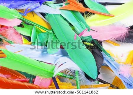 Beautiful feathers. #501141862