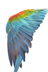 Beautiful Feathers of a Red-and-green Macaw