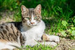 Beautiful female cat sitting in a garden, close up, feline