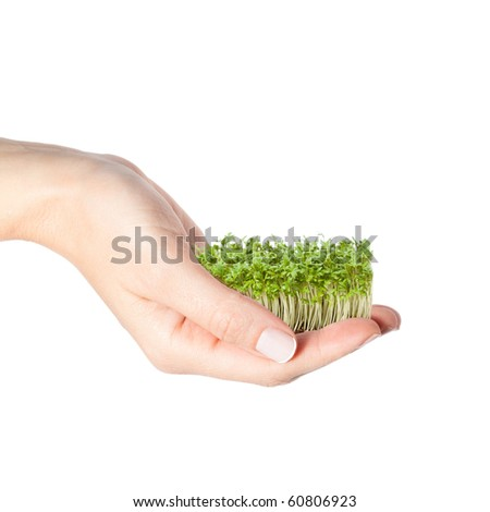 Beautiful female hand holding small seedlings - stock photo