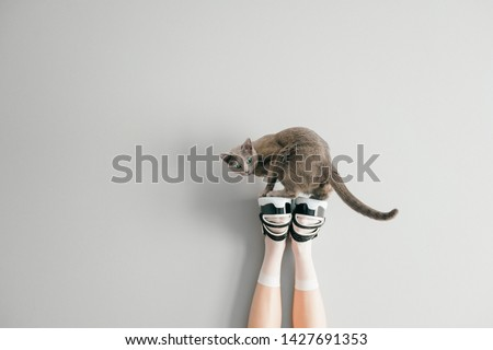 Beautiful female legs in white mesh trendy socks wearing fashionable black white high wedge leather sandals. Womens long legs in stylish shoes with russian blue cat standing above on gray background