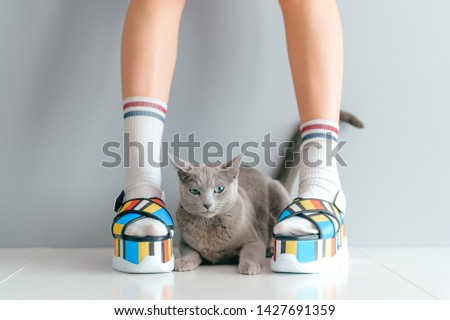 Beautiful female legs wearing fashionable shoes with lovely kitten on gray background