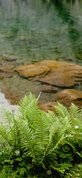 Beautiful fern grows near the clear lake. Iphone 10 wallpaper. Nature background.