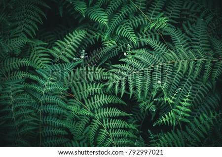 Beautiful fern leaves background #792997021