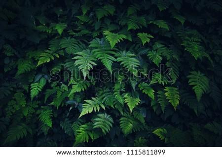 Beautiful fern leaves background. Leaf texture, nature dark green background. Vintage toned effect #1115811899