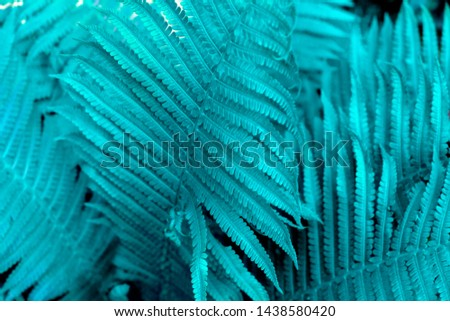 Beautiful fern leaves foliage. Natural floral fern background. Living Blue creative and moody color of the picture.
