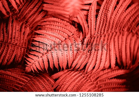 Beautiful fern leaves foliage. Natural floral fern background. Living Coral creative and moody color of the picture.