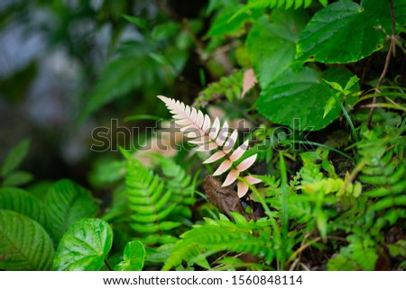 Beautiful ferns leaves green foliage natural floral fern background. Wild fern in rainforest jungle of Costa Rica. #1560848114