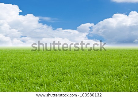 Beautiful field with a green grass and fluffy clouds