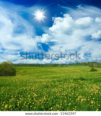 Beautiful field with dandelions and the cloudy sky