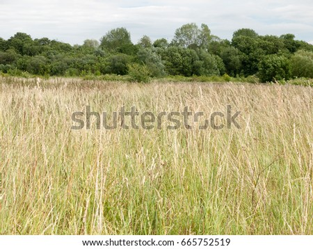 beautiful field with trees and sky on a nice sunny day in england uk long grass