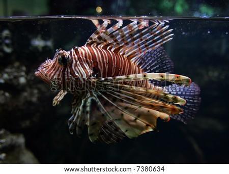 Beautiful fish.