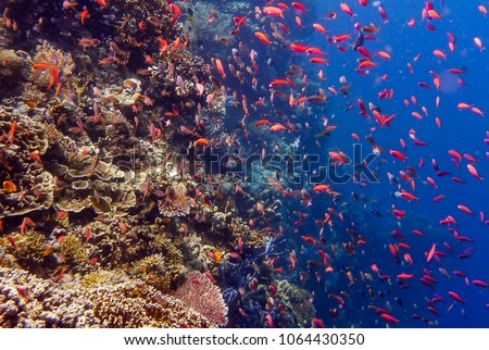 Beautiful fish and coral reef in underwater garden of Menjangan Island - Bali.