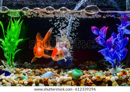 Beautiful fish in the aquarium,Goldfish, aquarium, a fish on the background of aquatic plants