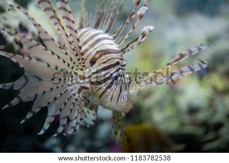 Beautiful fish in the aquarium on decoration  of aquatic plants background. A colorful  fish in fish tank. #1183782538