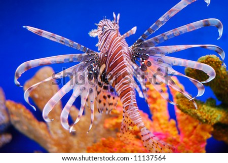 beautiful fishes in sea. stock photo : Beautiful fish
