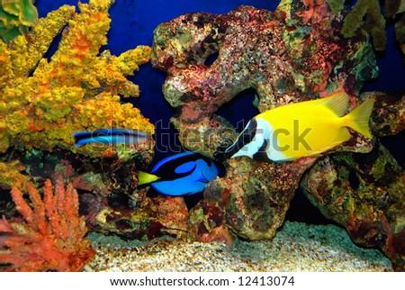 stock photo : Beautiful fish near corals in the deep sea