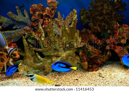 beautiful fishes in sea. stock photo : Beautiful fishes in the blue sea