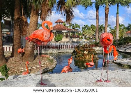 Beautiful flamingos exotic birds in exotic nature