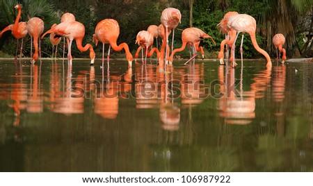 Beautiful flamingos in nature. Barcelona Zoo
