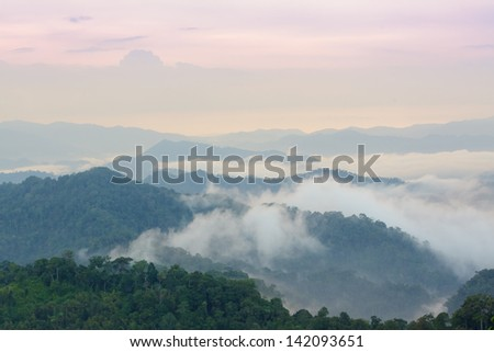 Beautiful floating fog landscape in rain forest after rain storm.