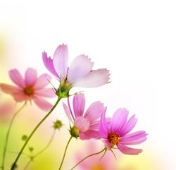 Beautiful Floral Border.Flower design