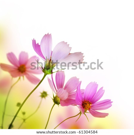 stock photo beautiful floral border flower design 61304584 - Каталог — Фотообои «Цветы»