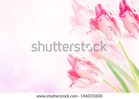 Beautiful floral border of pink violet tulips with blurred background