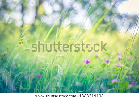 Beautiful floral closeup ecology nature landscape with meadow and wild flowers. Wonderful nature landscape, spring summer flowers abstract grass background. Soft morning light, bright seasonal scenery