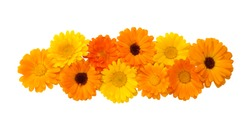 Beautiful Floral decorative element for design. Floral arrangement of yellow and orange calendula flowers on isolated white background. Flat lay. The object of a large number of heads of flowers