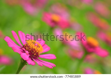 Beautiful Floral in garden