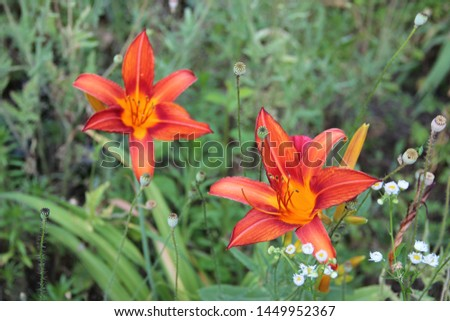 Beautiful floral landscape. Natural macro background.  Beautiful lilies in the garden. Hd wallpaper  flowers nature wallpapers for desktop backgrounds.  #1449952367