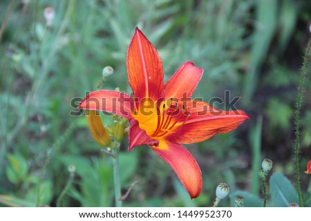 Beautiful floral landscape. Natural macro background.  Beautiful lilies in the garden. Hd wallpaper  flowers nature wallpapers for desktop backgrounds.  #1449952370