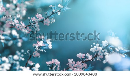 Photo of Beautiful floral spring abstract background of nature. Branches of blossoming apricot macro with soft focus on gentle light blue sky background. For easter and spring greeting cards with copy space