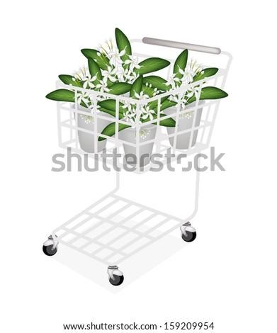Beautiful Flower, An Illustration of Lovely White Common Gardenias or Cape Jasmine Flowers on Green Leaves in Flowerpot for Garden Decoration.