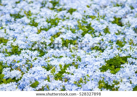 stock photo beautiful flower background amazing view bright blue white blooming at middle of sunny spring day 528327898 - Каталог — Фотообои «Цветы»