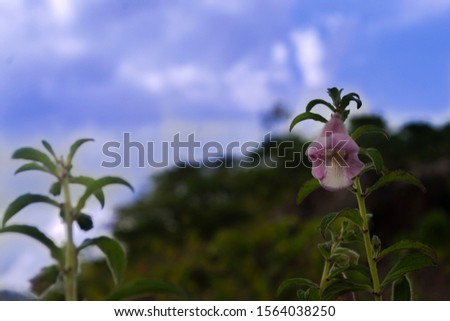 beautiful flower background nice sunset with nice cloud