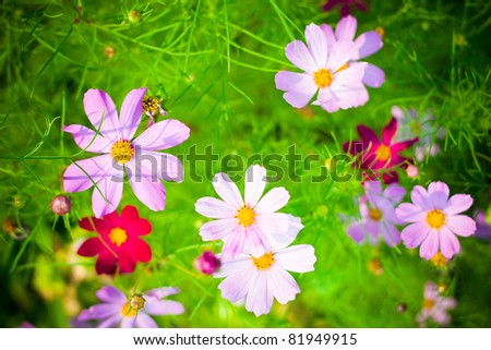 Beautiful flower background. Small depth of sharpness