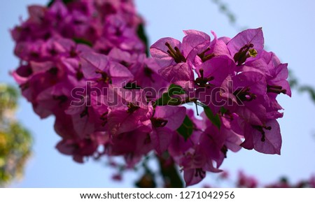Beautiful Flower Bouquet #1271042956