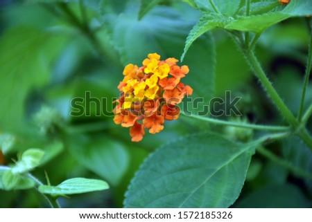 Beautiful Flower in Garden | Nature background #1572185326