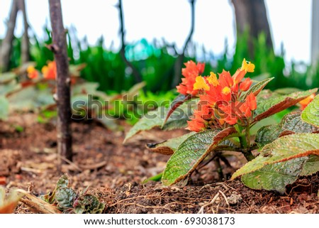 beautiful flower in garden with soft-focus in the background. over light #693038173