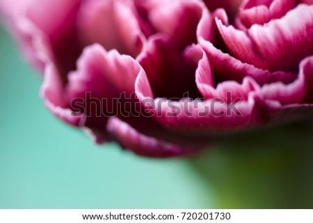 Beautiful flower in macro closeup