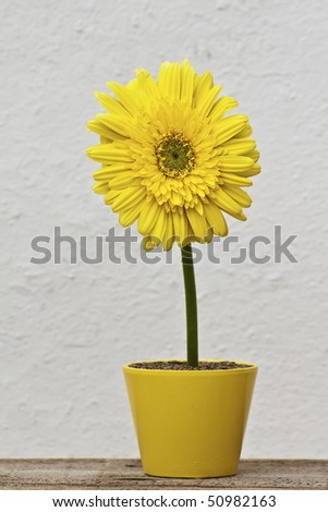 Beautiful flower in vase in white background