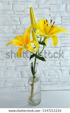Beautiful flower Lily on a white background brick