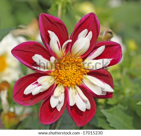 Natural Green Flower Beautiful Flower on a Natural