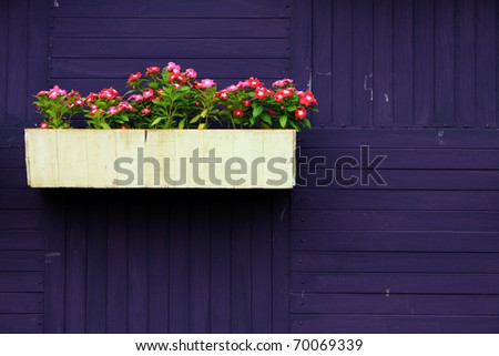 Beautiful flower on blue wall background
