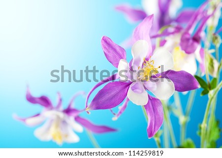 beautiful flower on sky background