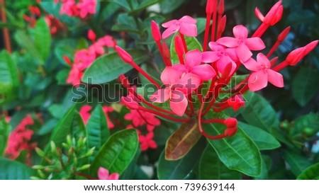 Beautiful flower on the garden - Shutterstock ID 739639144